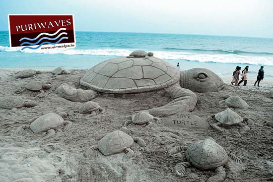 Numbers of sandy Turtles gathered at Puri Beach