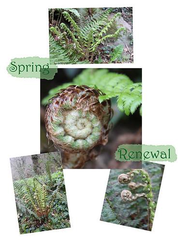 fern-mosaic-spring-renewal-w