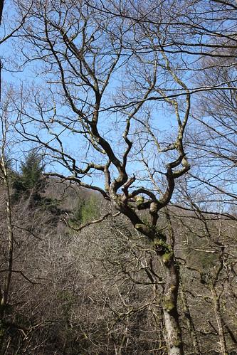 20120415_3900_Rockford-tree