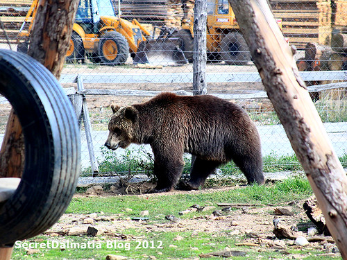 Brown bear at the playground