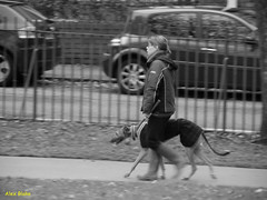 A Pony At Double Carpet Each Way On The One Dog
