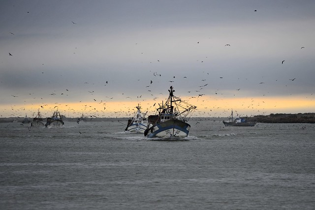 De visservloot keert terug