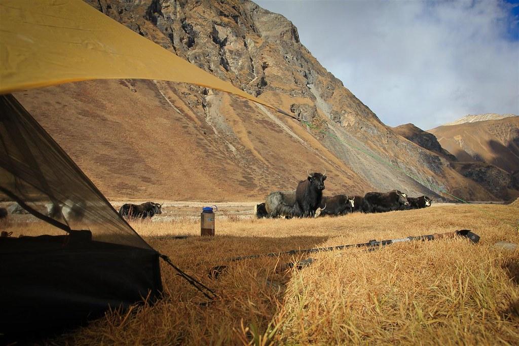 Kaghmara Pedi bivaouc, 3900m, Shey Phoksundo NP, Dolpo, Nepal