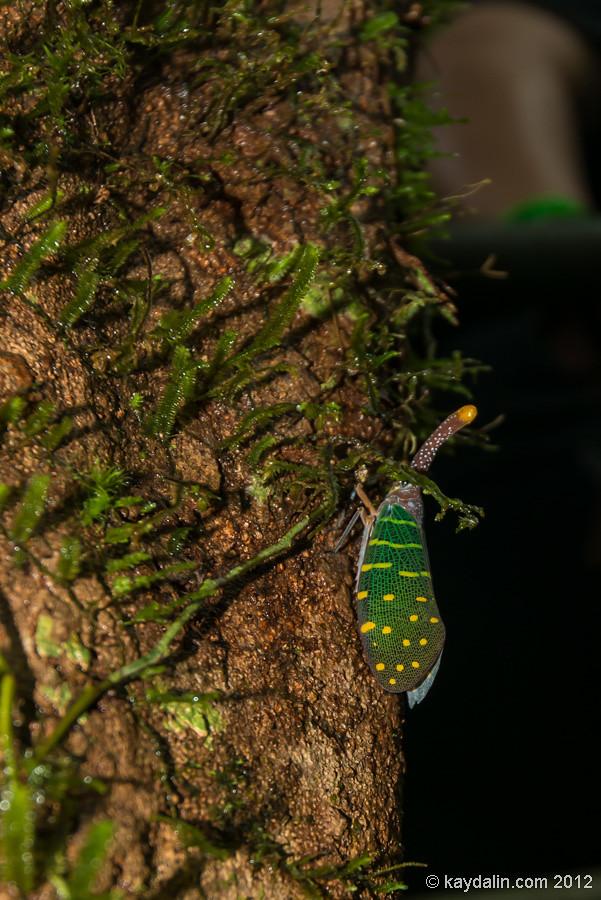 насекомое в мулу