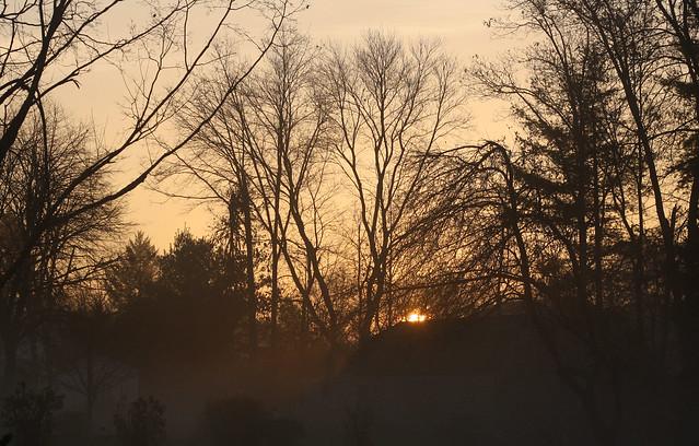 fogmorning