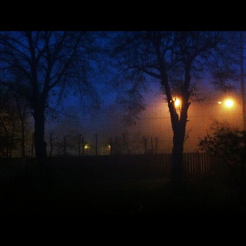 The #fog is stronger this morning than yesterday...my phone couldn't capture it right but it looked pretty cool~