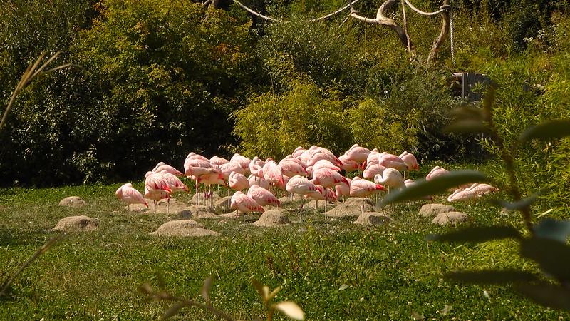 Zürich Zoologischer Garten