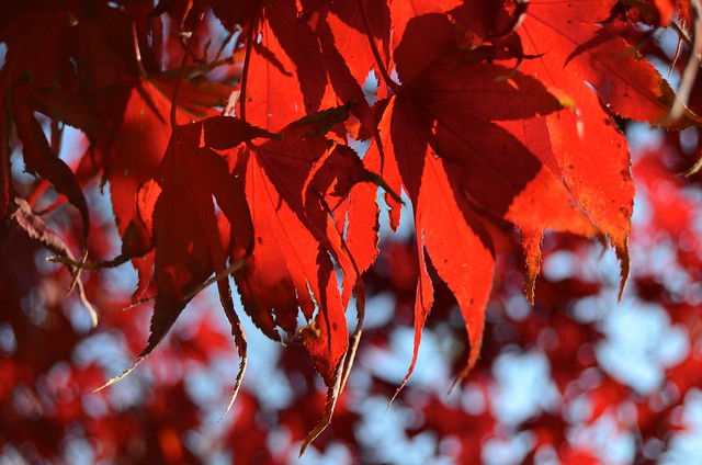 Autumn in Boston 5