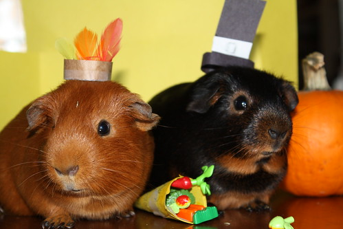 We are thankful for our cornucopia of treats