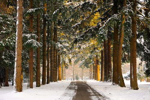 Winter in Arnhem by marcoderksen