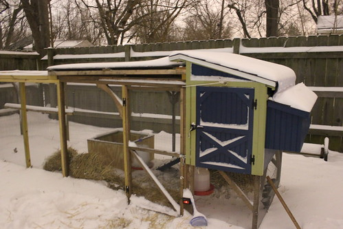 20121221. I have a remarkably steady hand. The chickens' first snow.