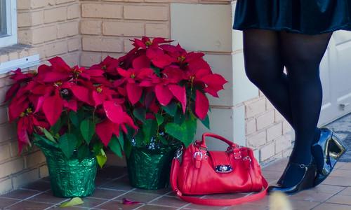 Poinsetta's, lulus bag, blowfish shoes