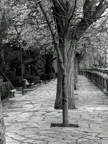 Il viale solitario by LAPOZZANGHERA
