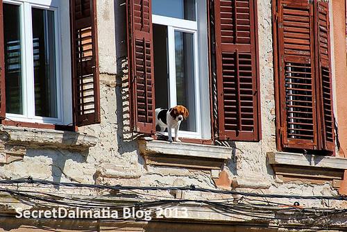 A watchdog