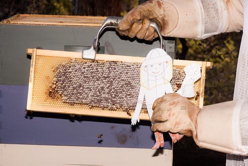 Flat Stanley the Beekeeper
