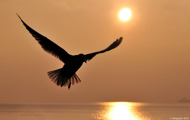 L'oiseau de lumière
