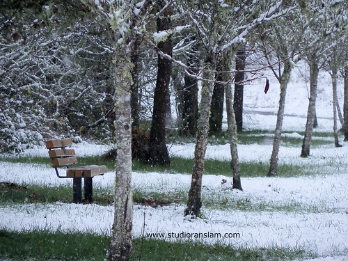 Snow Trees Bench