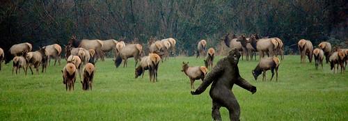 bigfoot sighting.