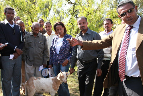 Tadelle Dessie at the ILRI ICARDA goat genetics resources training course