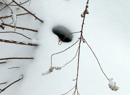 vole hole in snow