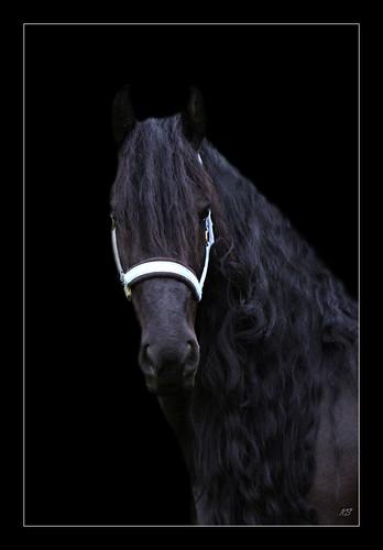 My princess in Black