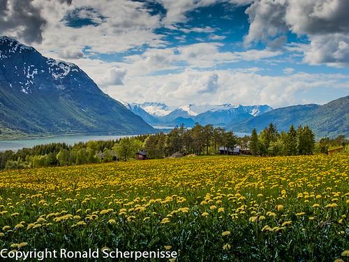 Norway by Ronald Scherpenisse
