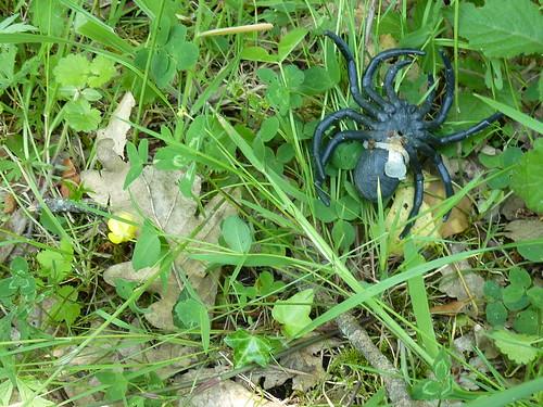 géocache araignée