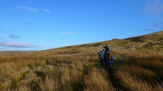 Dryburn Moor
