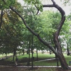 twisty-tree