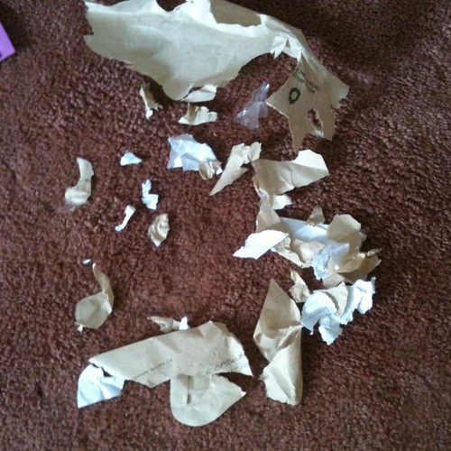 Dog's lucky he only ate the envelope