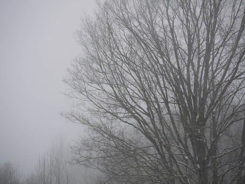 Maple fog