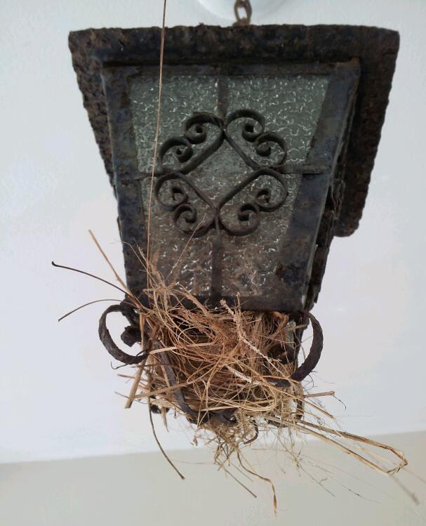 reinita nest