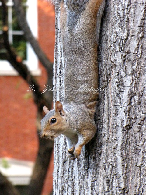 Crazy Squirel of NYC