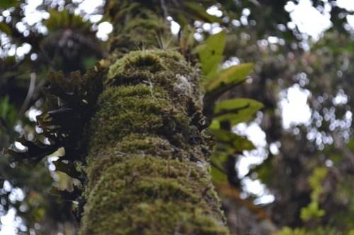 fractales y orquideas