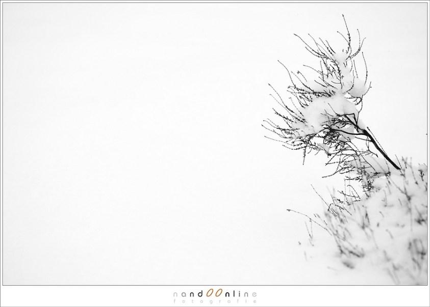 minimalisme tijdens het fotograferen in een sneeuwbui