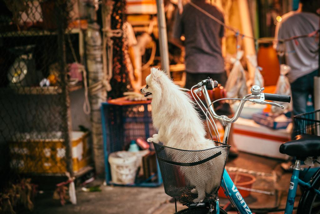 Basket Pup