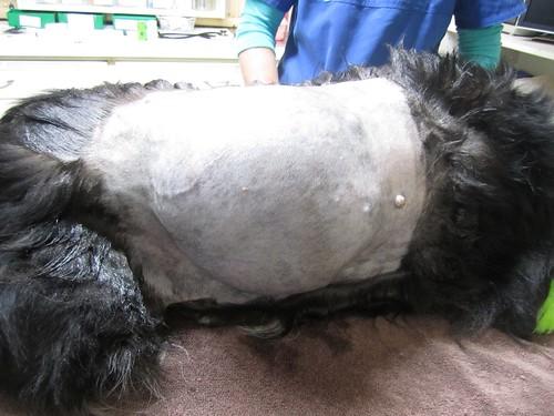 Monty's massive lump