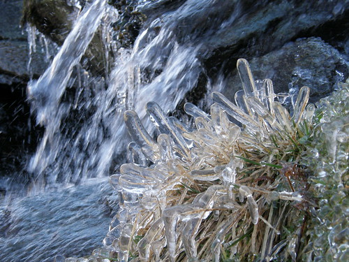 Ice coated grass blades, by Galeforth Gill