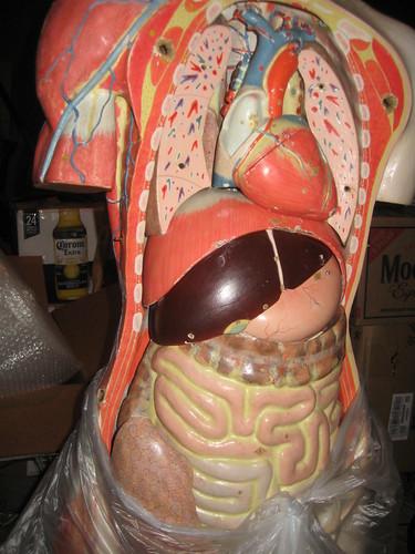 inside the torso