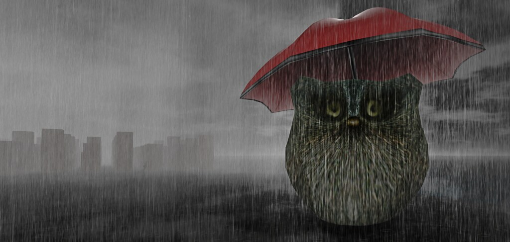The owl and the umbrella