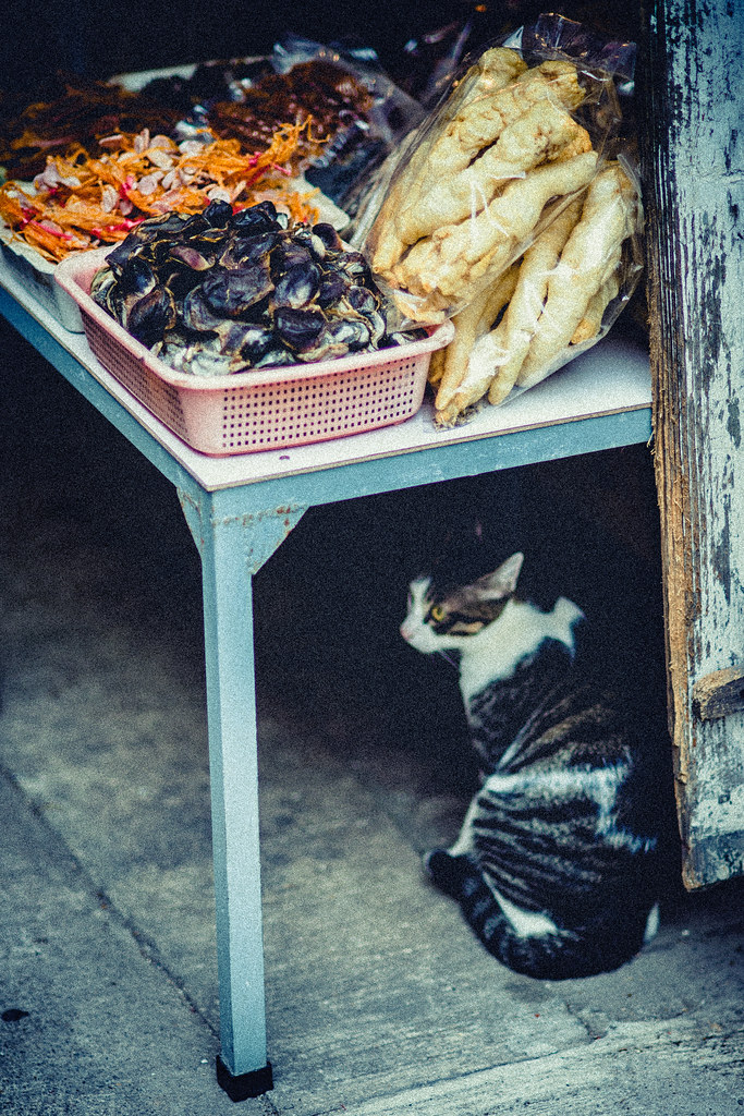 Seafood Kitty