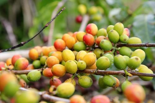 Coffee Beans_5380