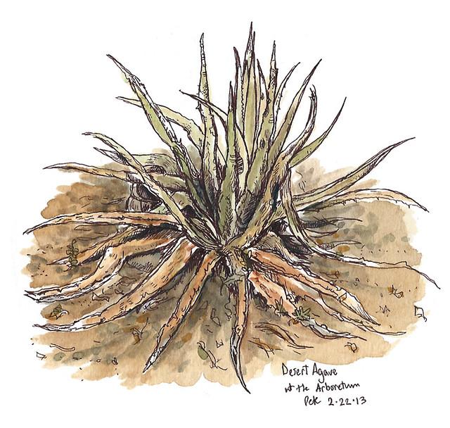 arboretum desert agave