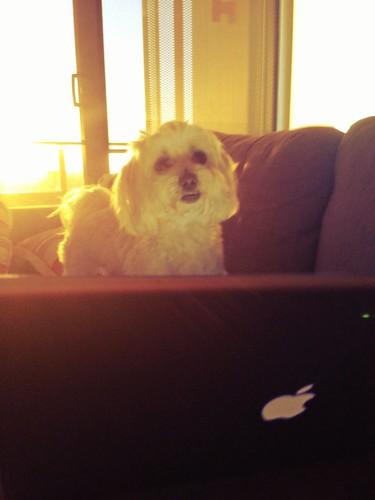 Chloe loves being online too!