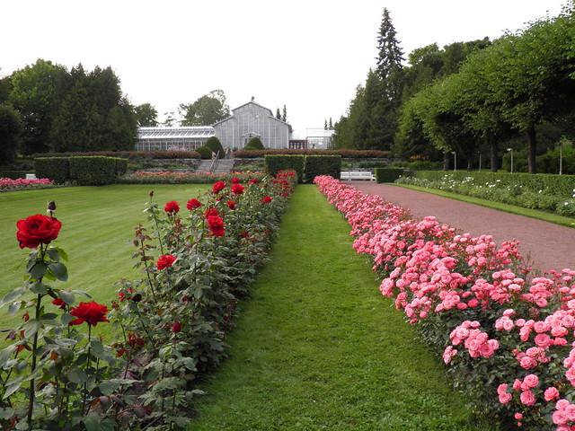 Красные и розовые розы // Red and pink roses