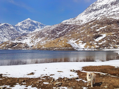 Dog next to Llyn Llydaw, Miners' Track, Snowdonia, Pen-y-Pass