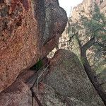 Narrow Trail at PInnacles