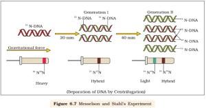 NCERT Class XII Biology Chapter 6 : Molecular Basis of Inheritance – AglaSem Schools