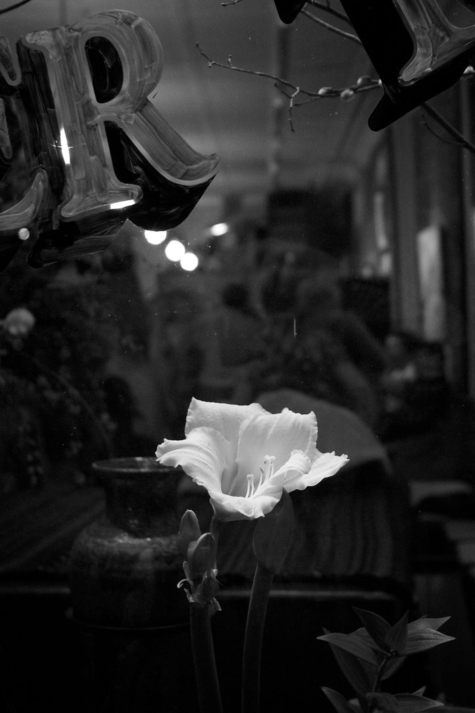How Much for that Flower in the Window?