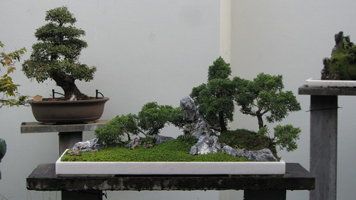 chinese gardens bonsai